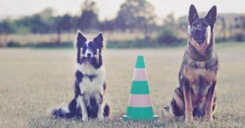 kursy psie