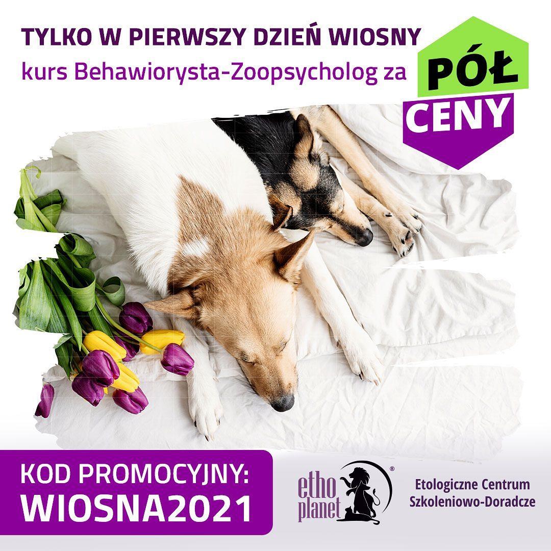 #kurs #kursonline #online #webinar #behawiorysta #zoopsycholog #course #dog #dogs #cat #cats  https://ethoplanet.com/kursy/behawiorysta-zoopsycholog/