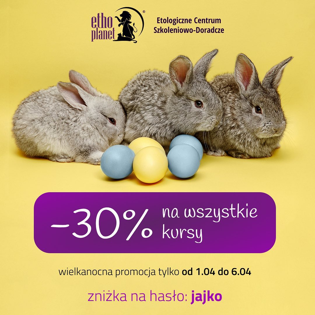 Świąteczna promocja! 30% taniej wszystkie kursy!!! #wielkanoc #kurs #easter #promocja #sale #online #webinar #szkolenie